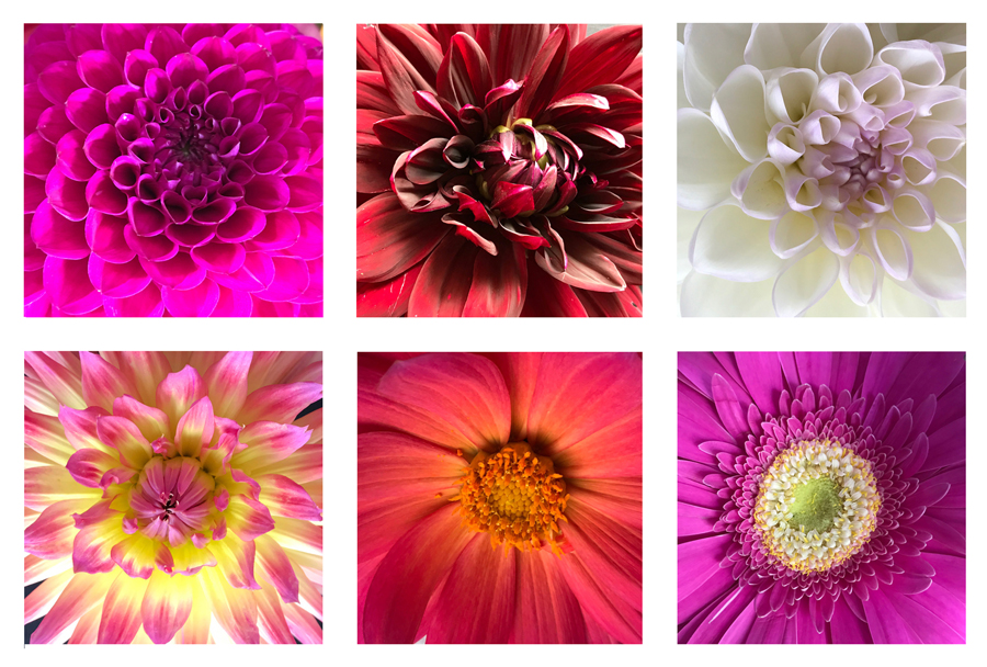 6x Bloemen: Tour de Natuur