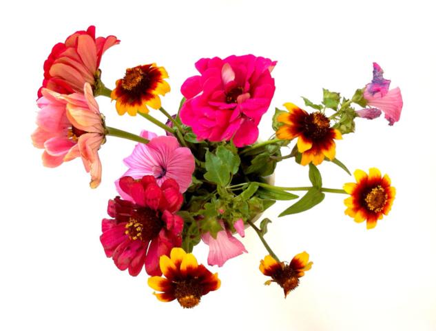 Bloemen: Tour de Natuur
